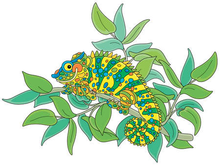 Funny multi colored chameleon, exotic lizard with protruding eyes and a prehensile tail, hiding among green leaves of a tropical tree branch in a wild jungle, vector cartoon illustration