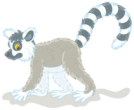 Exotic tropical Madagascar lemur with a very long striped tail walking, vector cartoon illustration isolated on a white background