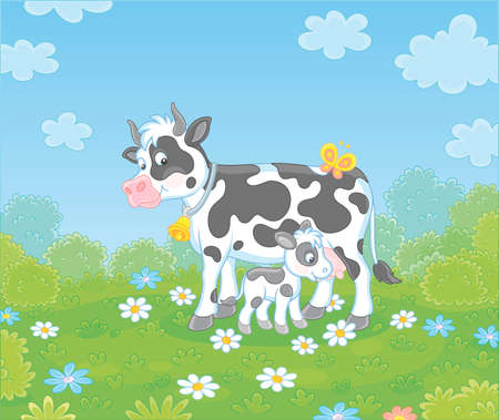 Happy spotted cow and a cute little calf drinking milk on green grass of a summer field with flowers on a beautiful warm day, vector cartoon illustration