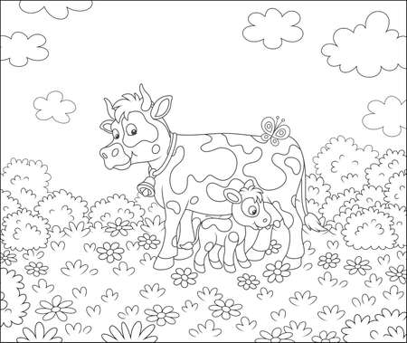 Happy spotted cow and a cute little calf drinking milk on grass of a summer field with flowers on a beautiful warm day, black and white vector cartoon illustration for a coloring book page