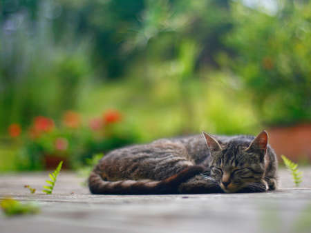 Sleeping cat in front of garden photo