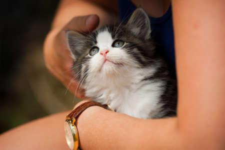 housepet: Kitten being hugged