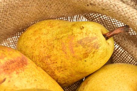 Ripe juicy pears, close-up, in a jute bag.