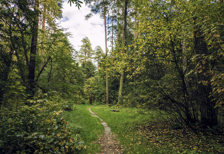 The dense forest of conifers and deciduous trees and forest path photo