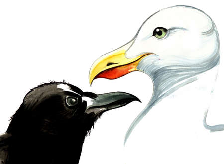 Crow and seagull