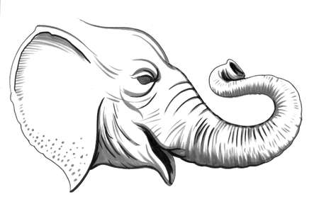 Olifant hoofd Stockfoto