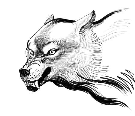 Angry wolf. Ink black and white drawing 版權商用圖片