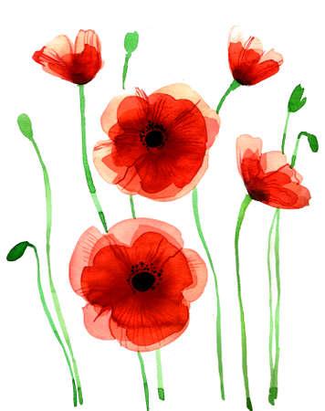 赤いケシの花。水彩手白背景に描画した図形 写真素材