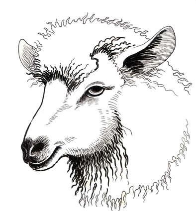 Cheep hoofd. Hand getrokken inktillustratie op een witte achtergrond.