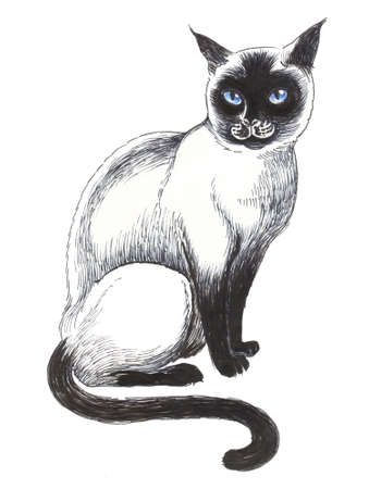 Siting cat. Hand drawin ink and pencil illustration on a white background
