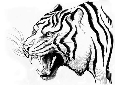 White tiger. Ink illustration
