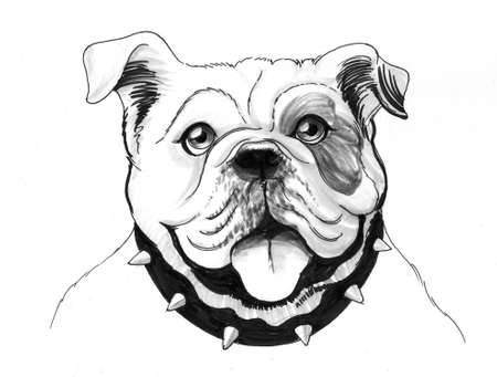 Bulldog head. Ink illustration 版權商用圖片