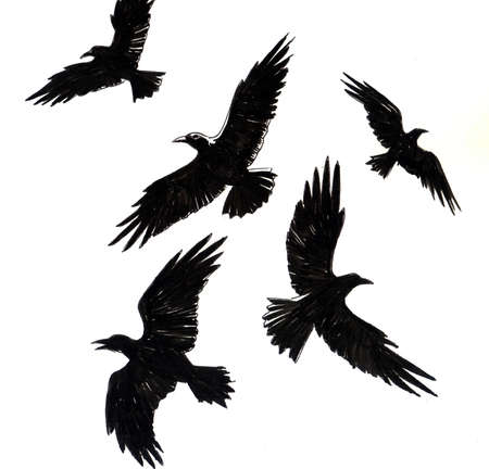 Crow birds. Ink illustration Reklamní fotografie