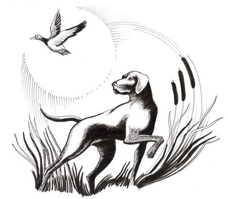 Flying duck and hunting dog. Ink illustration Foto de archivo