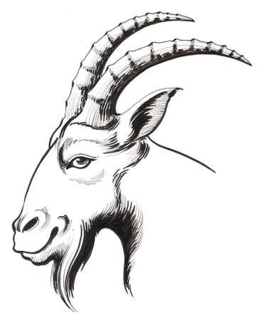 Goat head Foto de archivo