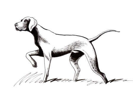 Hunting dog. Ink illustration Reklamní fotografie