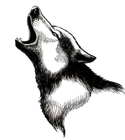Huilende wolf. Zwart-witte inktillustratie