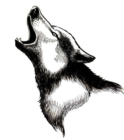 Howling wolf. Black and white ink illustration Stock Photo
