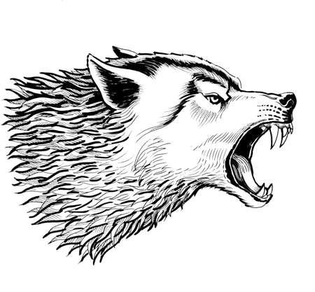 Angry wolf. Black and white ink drawing