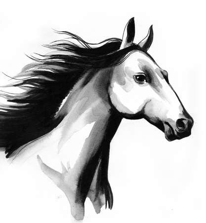 Mooi paard