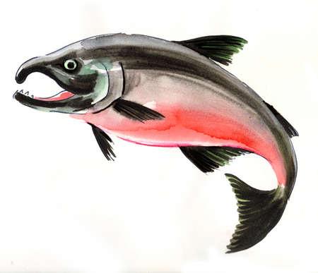 Watercolor salmon