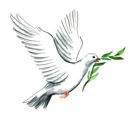 Paloma de la paz con rama de olivo Foto de archivo