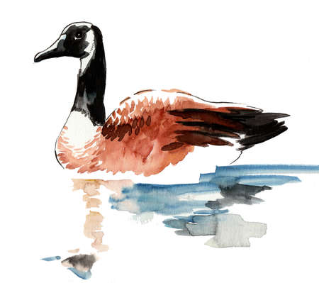 Watercolor goose