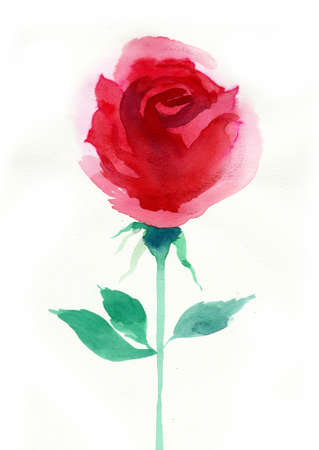 Red watercolor rose 스톡 콘텐츠