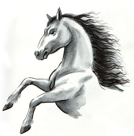 White horse hand drawing 스톡 콘텐츠