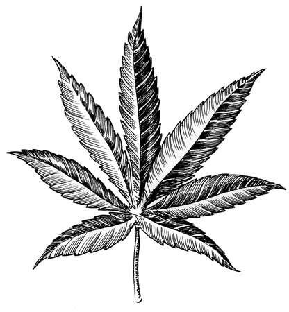 Cannabis leaf hand drawing