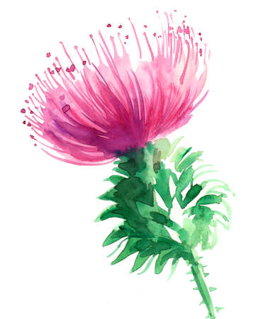 Watercolor sketch of a pink flower 스톡 콘텐츠