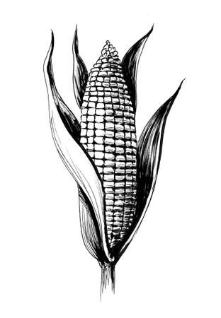 Ink black and white drawing of a corn
