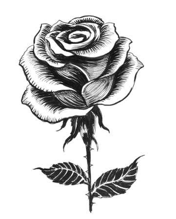 Single white rose flower