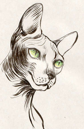 Sphinx hairless cat with green eyes Imagens