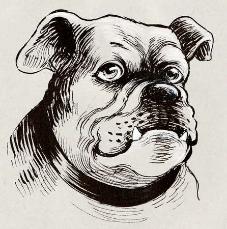 Sad bull dog. Ink sketch on colored paper Zdjęcie Seryjne