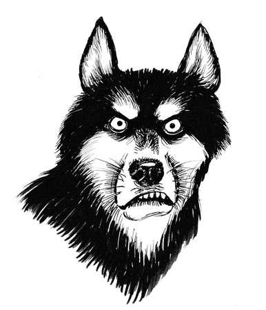 Angry husky dog. Ink black and white illustration Stock Photo