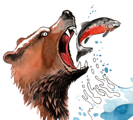 Grizzly bear catching jumping salmon fish. Ink and watercolor illustration
