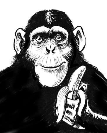 Chimpanzee with a banana