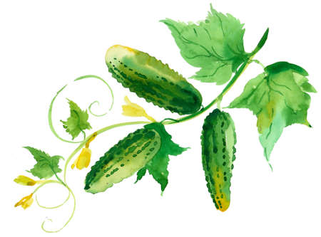 Watercolor cucumbers
