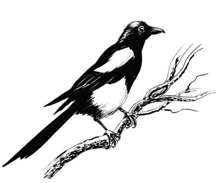 Magpie bird on a tree