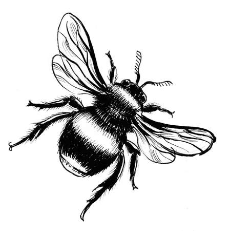 Bumble bee. Ink black and white illustration