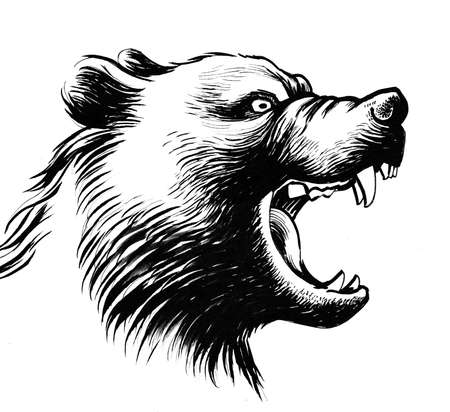Roaring bear head. Ink black and white illustration 版權商用圖片