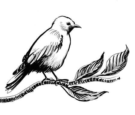 Bird on a tree branch. Ink black and white drawing