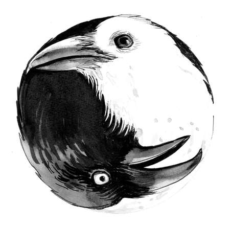 Yin Yang. Black and white crows