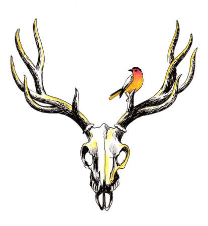 Deer skull and bird. Ink and watercolor illustration