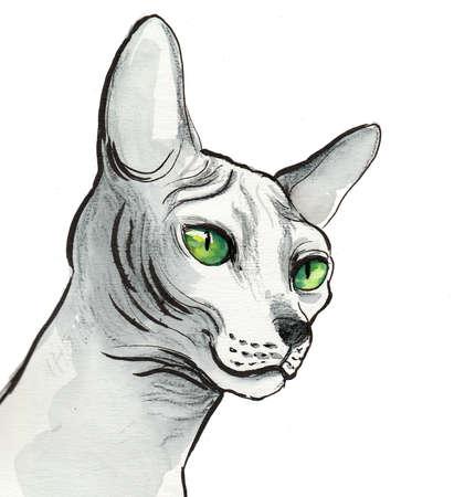 Sphinx cat on white