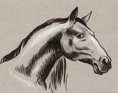 Horse head on grey