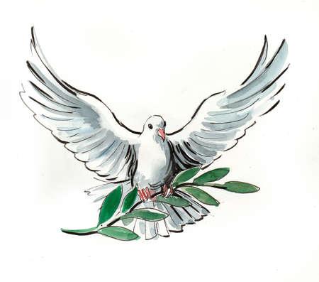 Witte duif. Aquarel illustratie