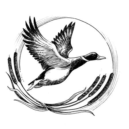 Ink black and white illustration of a flying duck Imagens