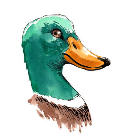 Duck head. Ink and watercolor illustration